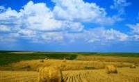 cropped-compressed-farm.jpg
